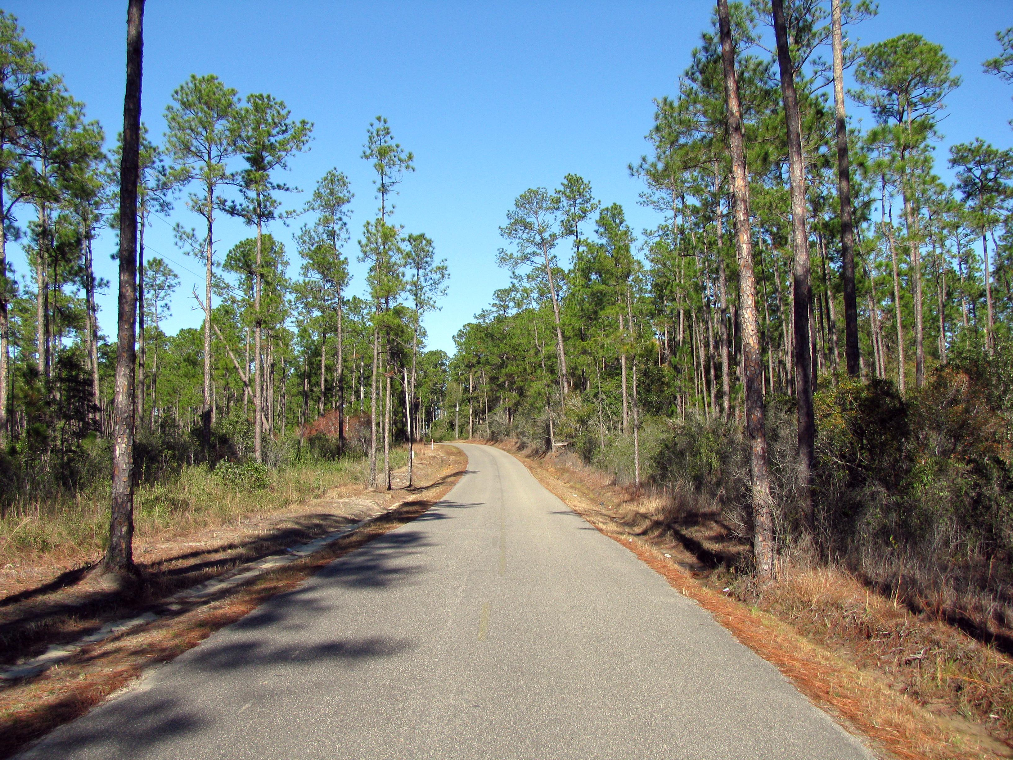 Mississippi Landscape Southern Live Oak