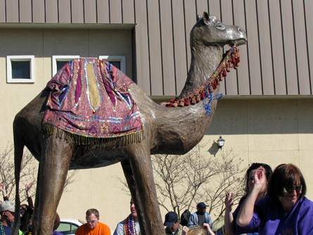 Camel Float