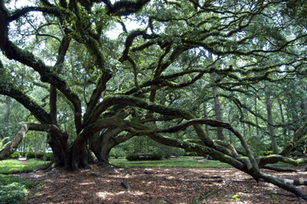 Seven Sisters, the current president of the Live Oak Society - Lewisburg, Louisiana. (Photo: Patrick Burke)