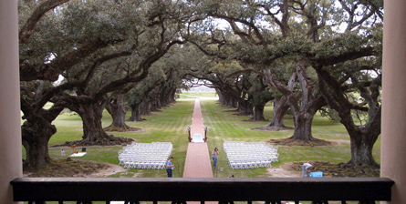 Live oaks in Oak Alley Plantation, Vacheria, Louisiana. (Photo: Tim Bekaert)