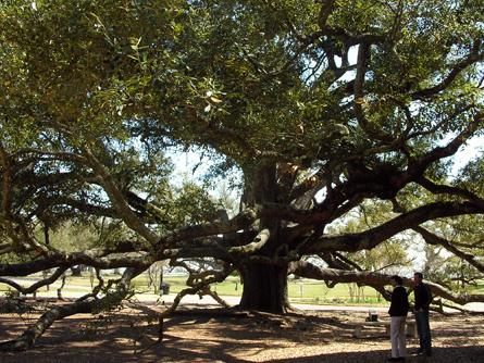 0225-001-friendship-oak
