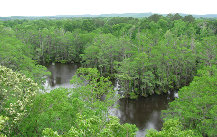 Vista - Perry Lakes, Alabama.