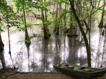 Cypress swamp with boat - Perry Lakes, Alabama